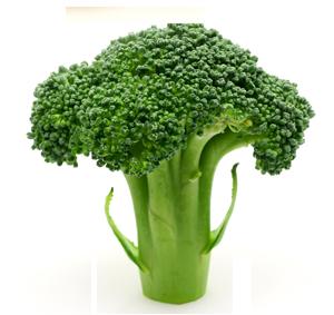 how to keep broccoli fresh in the fridge