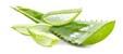 tag Aloe icon