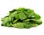 tag Spinach icon