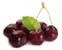 tag Black Cherry icon